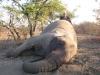 africa-2011-a-450_0