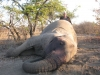 africa-2011-a-450_1